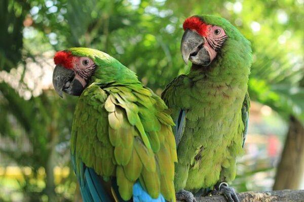 parrot-2659023_640