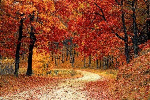 fall 1072821_640